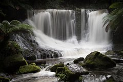 Imagen Mt Field National Park Including Russell Falls: Private Sightseeing and Photography tour from Hobart