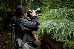 Imagen Private Hobart Photography Tour
