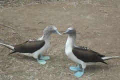 Imagen Galapagos Enchanting (5 Days)