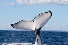 Imagen Phillip Island Whale Watching Tour