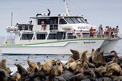 Imagen Phillip Island Seal-Watching Cruise