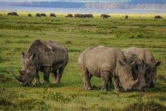 Lake Nakuru National Park Full Day