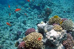 Hurghada Red Sea and Sinai Giftun Island Budget Snorkeling Trip from Hurghada 71107P19