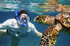 Hurghada Red Sea and Sinai Giftun Island Budget Snorkeling Trip from Hurghada 71107P20