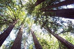 Ver la ciudad,City tours,Salir de la ciudad,Excursions,Actividades,Activities,Excursiones de un día,Full-day excursions,Actividades de aventura,Adventure activities,Salidas a la naturaleza,Nature excursions,Excursión a Muir Woods,Excursion to Muir Woods