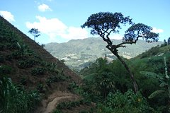 Imagen Private Tour: Medellin Coffee Experience and Workshop