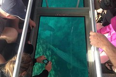 Imagen Ningaloo Reef 1-Hour Glass Bottom Boat Tour: Coral Viewing Fantasy Tour
