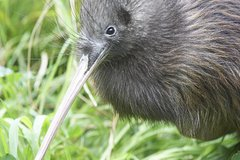 Imagen Willowbank Wildlife Reserve Day Entry & Guided Kiwi Tour