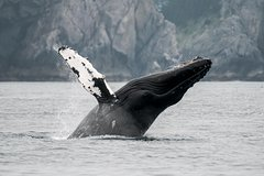 Activities,Activities,Activities,Water activities,Water activities,Water activities,Nature excursions,Sports,Excursion to Mendenhall Glacier,Whale watching in Juneau