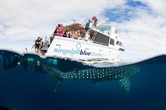 Imagen VIP luxury chartered escapes, exploring the reef at your own pace