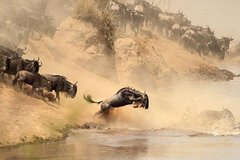 Unique and adventurous Safaris across Kenya