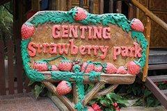 Imagen Genting Highlands, Strawberry Farm & Batu Caves Tour from Kuala Lumpur