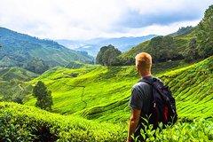 Imagen Full Day Cameron Highlands Tour from Kuala Lumpur