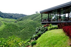 Imagen Private Full-Day Cameron Highlands Nature Tour with Entrance fee