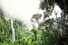 Imagen La Chorrera, The highest waterfall in Colombia private tour