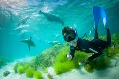 Imagen Half-Day Sea Lion Snorkeling Tour from Port Lincoln