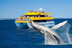 Imagen Spirit of Hervey Bay Whale Watching Cruise