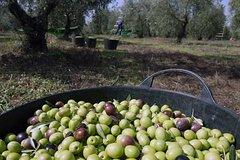Imagen Olive oil farm tour from Seville