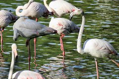 Imagen Donana National Park and El Rocío: 4x4 Guided Tour from Seville