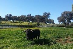Imagen Bull Breeding Farm: Guided Half-Day Tour from Seville