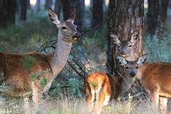 Imagen Donana National Park in Two Days from Seville