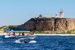 Imagen Humpback Whale Encounter Tour from Newcastle