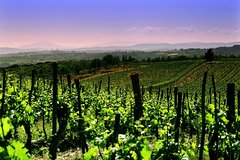 Private Tour to a winery in Franciacorta and Bergamo from Milan w/ Hotel pi