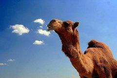 Activities,Adventure activities,Nature excursions,Agadir Tour