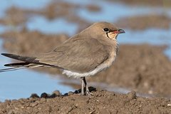 Imagen Expert and friendly guided birding tour from Seville