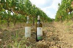 Gourmet Wine Tour San Gimignano Wine Tasting - San Quirico Winery