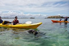 Imagen Seal Island and Penguin Island or Point Peron Sea Kayak Tour