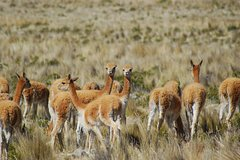 Imagen Private 2-Day Colca Canyon Tour from Arequipa to Puno