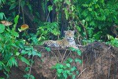Imagen 4-Day Amazon Jungle Tour at Reserva Amazonica