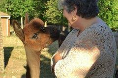 Alpaca Ranch and Fiber Processing Mill Tour