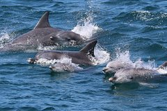Imagen Jervis Bay Dolphin Eco Cruise