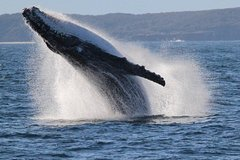 Imagen Jervis Bay Whale Watching Cruise