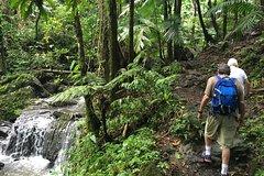 City tours,City tours,City tours,Activities,Walking tours,Bus tours,Adventure activities,Nature excursions,Excursion to El Yunque National Park