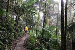 City tours,Tours with private guide,Specials,Excursion to El Yunque National Park