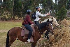 Imagen Ride Peruvian Paso Horses in Cusco