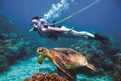 Imagen Green Island Day Trip from Cairns Including SNUBA or SNUBA Doo Experience