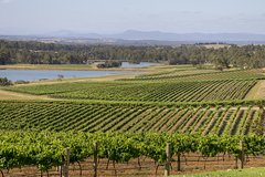 Imagen Hunter Valley Wine and Wildlife Tour from Sydney with Walkabout Wildlife Park
