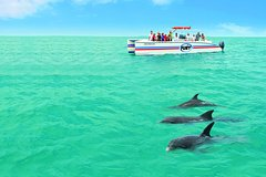 Activities,Activities,Activities,Water activities,Water activities,Water activities,Nature excursions,Sports,Sports,Key West Cruise,Dolphin Watching