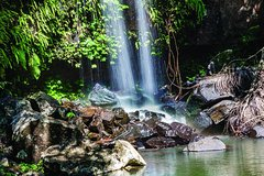 Full Day Small Group Luxury Tour to Tamborine Mountain