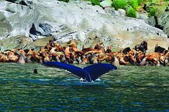 Activities,Activities,Water activities,Water activities,Nature excursions,Sports,Whale watching in Juneau