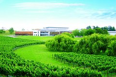 Villa Maria Wine Tour and Airport Shuttle from Auckland Private Car Transfers