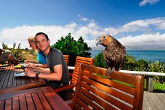 Imagen Kapiti Island Day Tour