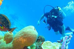 Imagen Rosario Islands Scuba Diving Experience