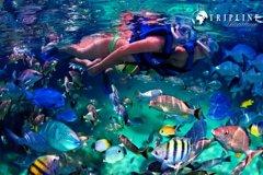 Actividades,Actividades acuáticas,Deporte,Excursión a Isla Giftun