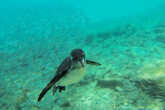 Imagen Full-Day Pinzon Island Snorkling, Fishing and La Fe Excursion Including Lunch