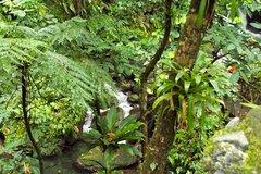 Imagen St Kitts Rainforest Tour